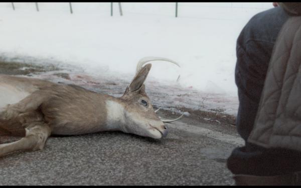 Deer Father2